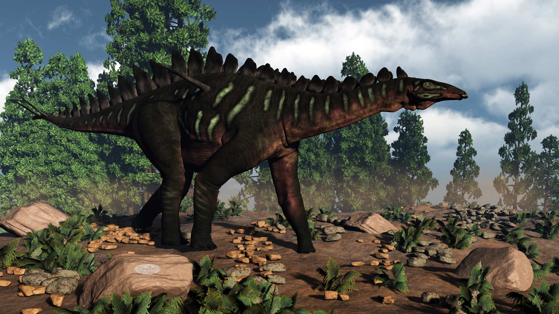 Miragaia dinosaur walking near wollemia pines by day - 3D render