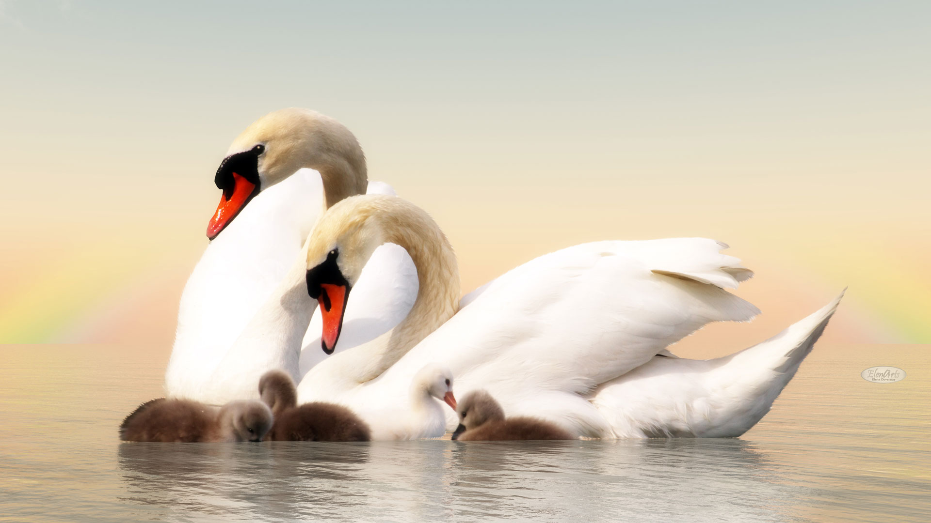 Swan family floating over water by sunset – 3D render