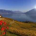 Lavaux region by autumn day, Vaud, Switzerland