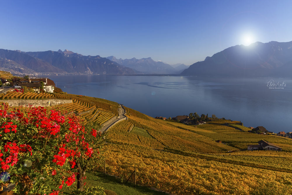 Lavaux region by autumn day, Vaud, Switzerland